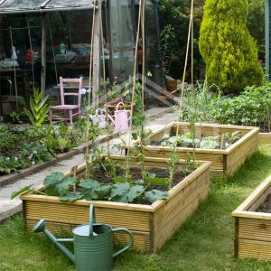 Group of raise beds with vegetables growing.